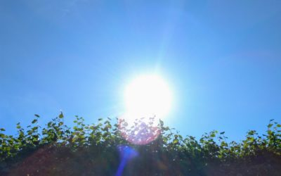 Paikkoja auringossa ja vihreitä oksia tarjolla